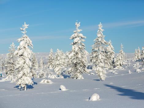◇◎フィンランド:雪の積もった木々