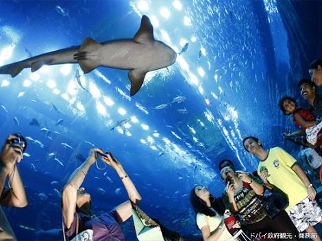 ◇◎ドバイ:ドバイ水族館