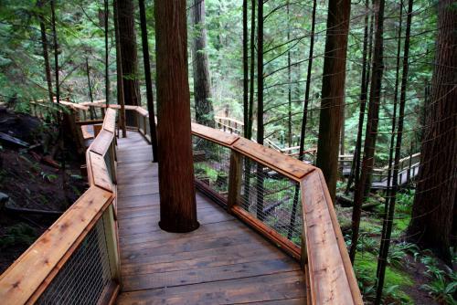 キャピラノ吊り橋のボードウォークで楽しく森林散策♪(バンクーバー)