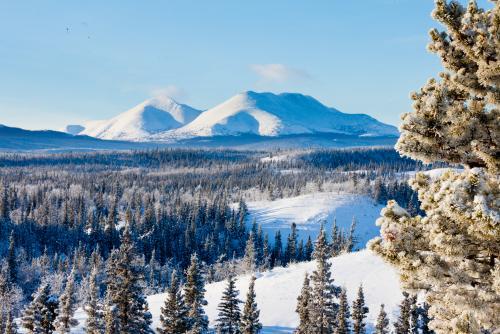 冬のホワイトホース