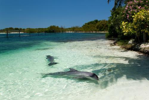 野生のイルカが多く生息してるバラデロの海(キューバ)