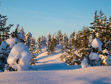 ◇◎ロバニエミ:冬の景色
