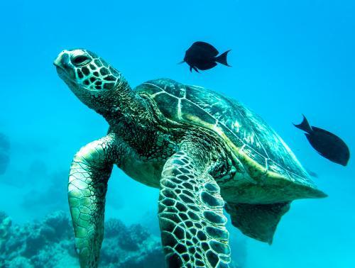 キレイな海でダイビング イメージ