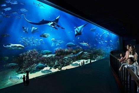 Ocean Gallery (S.E.A. Aquarium)