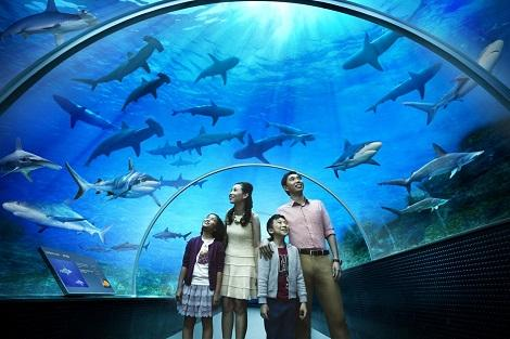 Shark Seas (S.E.A. Aquarium)
