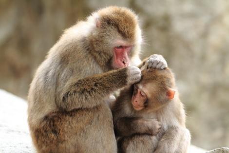 ◇大分:高崎山自然動物園