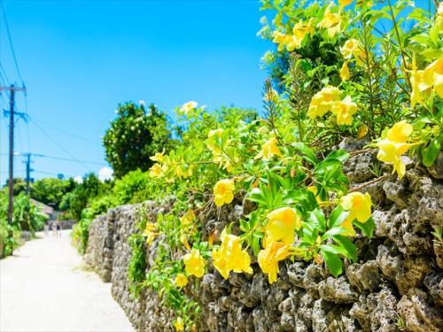 カラフルな花と石垣はインスタ映え!
