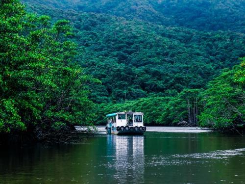手つかずの大自然が残る西表島でネイチャーツアー!