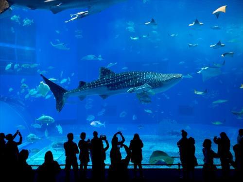 沖縄観光の代名詞「美ら海水族館」は必ず行きたい場所♪