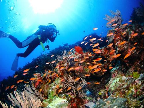 一度潜ったら虜になりそうな沖縄の綺麗な水中世界