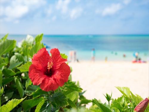 ハイビスカスと綺麗なビーチは写真映え間違いなし!