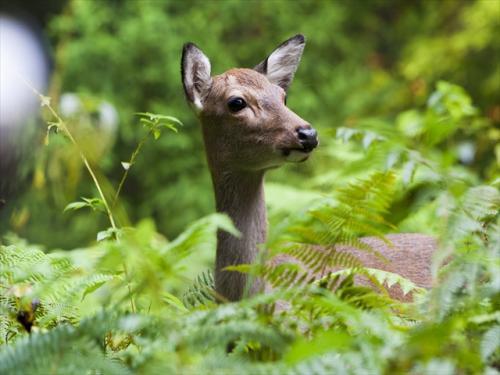 世界自然遺産の屋久島には野生動物もたくさん♪