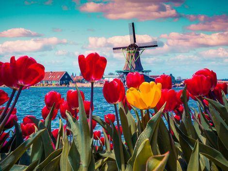 ◇アムステルダム:風車とチューリップ