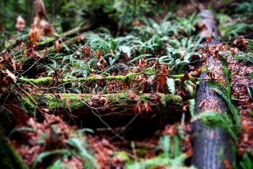 キャピラノ吊り橋を渡ると…そこには豊かな熱帯雨林が!(バンクーバー)