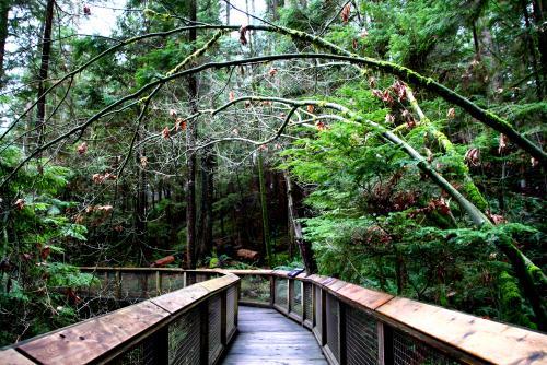 キャピラノ吊り橋のボードウォークで森林浴♪(バンクーバー)