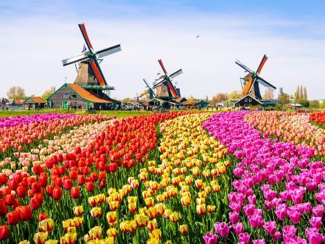 ◇アムステルダム:チューリップ