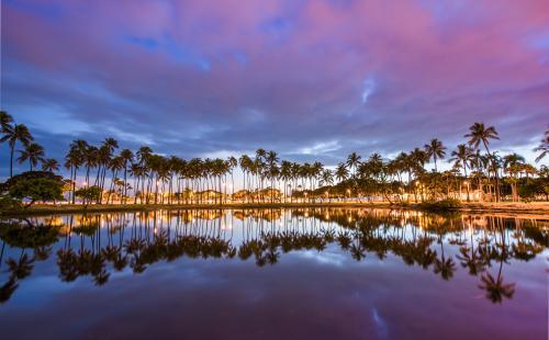 南国情緒たっぷりのヤシの木(ハワイ)