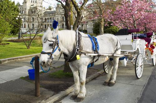 ビクトリアの街を馬車で観光♪