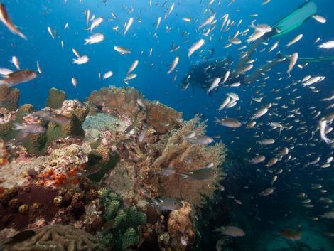 タオ島はタイの中でも有数のダイビングスポット/イメージ