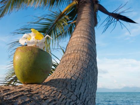 サムイ島の通称は「ココナッツアイランド」
