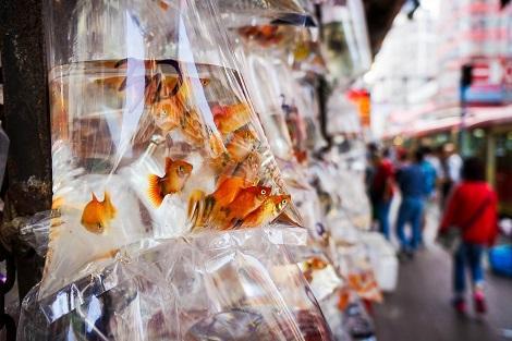 香港:金魚街