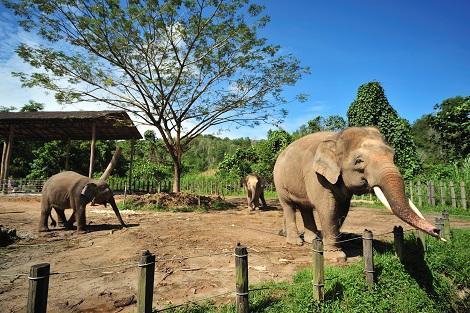 コタキナバル:ロッカウィ動物園