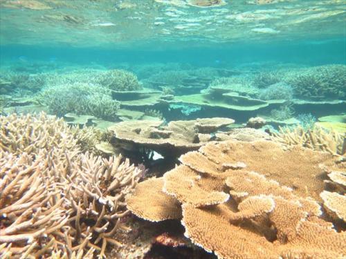 宮古島 シュノーケルでサンゴが広がる水中世界へ