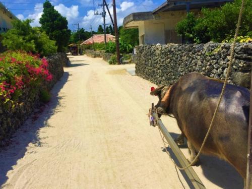 竹富島でのんびり水牛車
