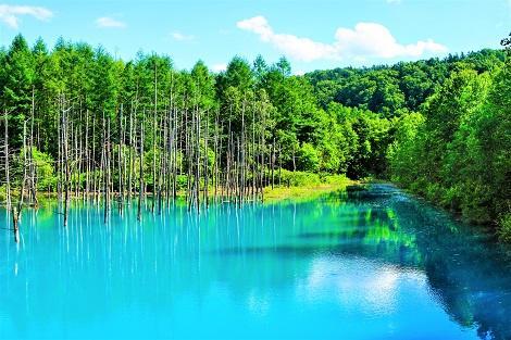 美瑛の青い池 神秘的な美しさ(10月までの立ち寄り)