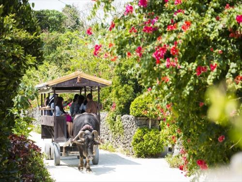 竹富島の名物「水牛車」でのんびり観光♪