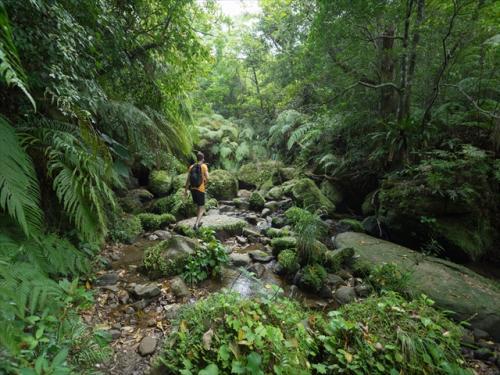 ジャングルの奥になる滝を目指してトレッキング!