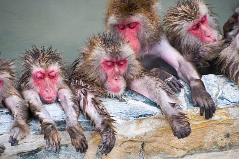 函館:冬から春にしか見られない!温泉に入るサルたち