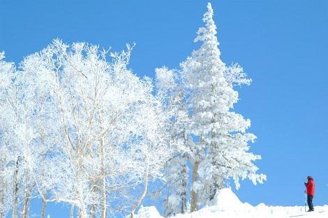 美しい白銀の世界(キロロリゾート公式ホームページより)